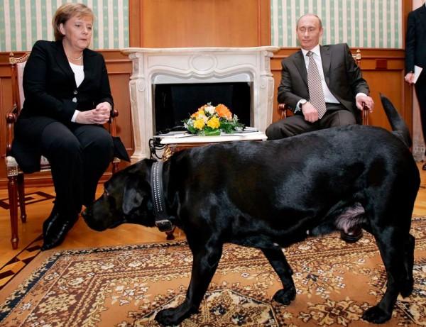 Владимир Путин, Ангела Меркель и лабрадор  Конни Полгрейв фото
