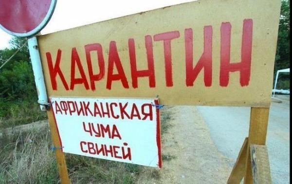 Крым Свиньи