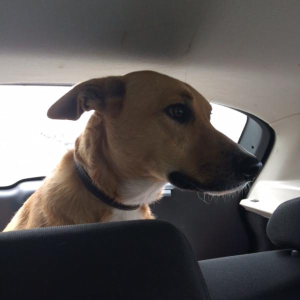 По дороге в Москву Чарли в авто