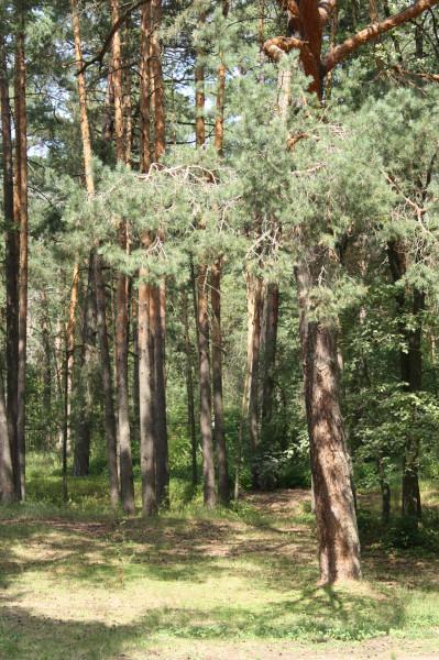 лес 1IMG_8775
