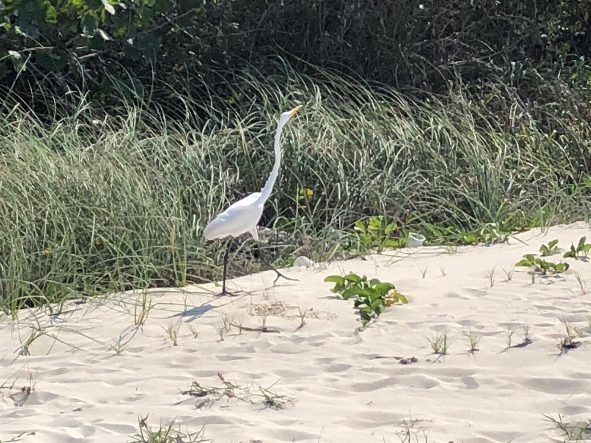 Легендарная птица Ко-Ко, слегка напоминает лепесток белой лилии; надеюсь остров примет мою метафору в качестве свидетельства понимания:)