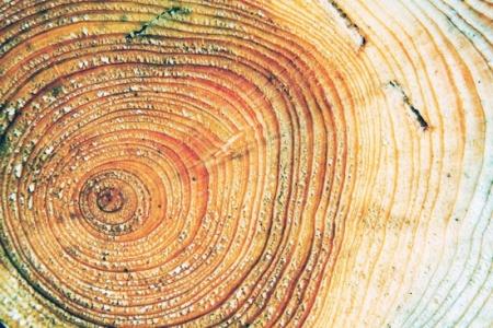 3624655-R3L8T8D-450-tree