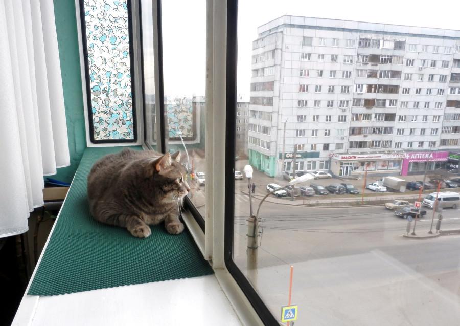Тарас на окне