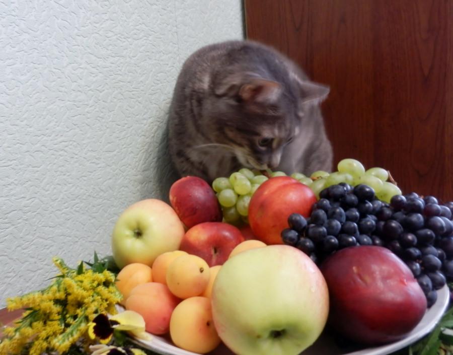 Тарас с фруктами