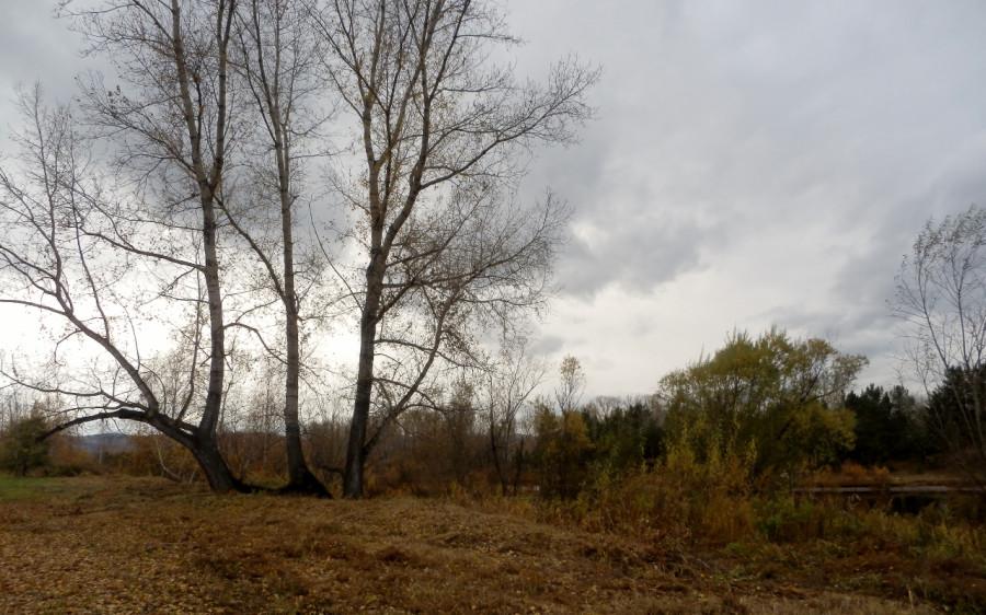 большие деревья (1280x800)