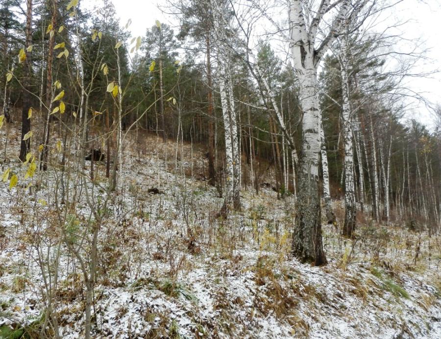 Косогор Первый снег