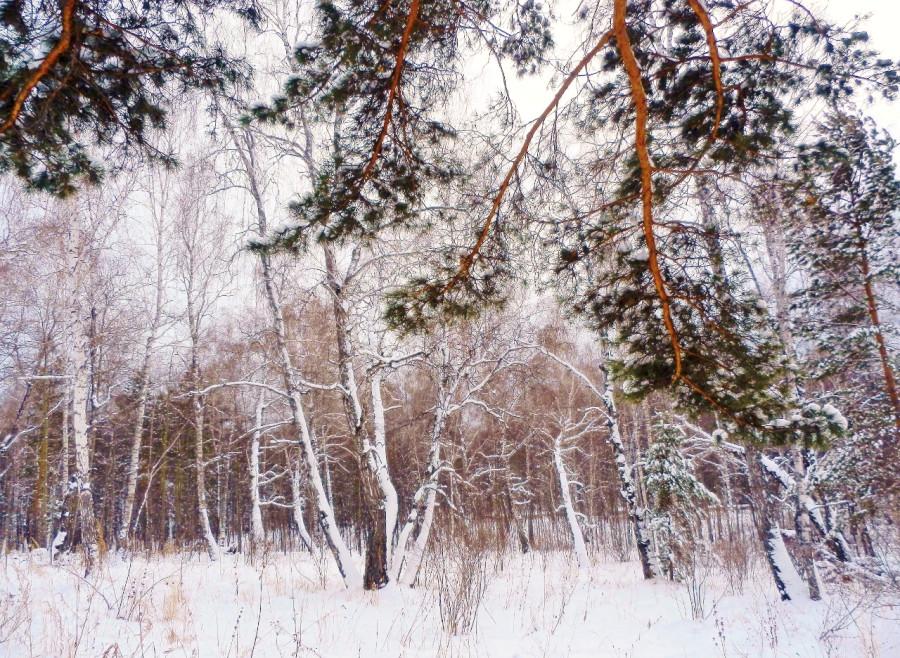 Лес 4 (1280x936) (2)