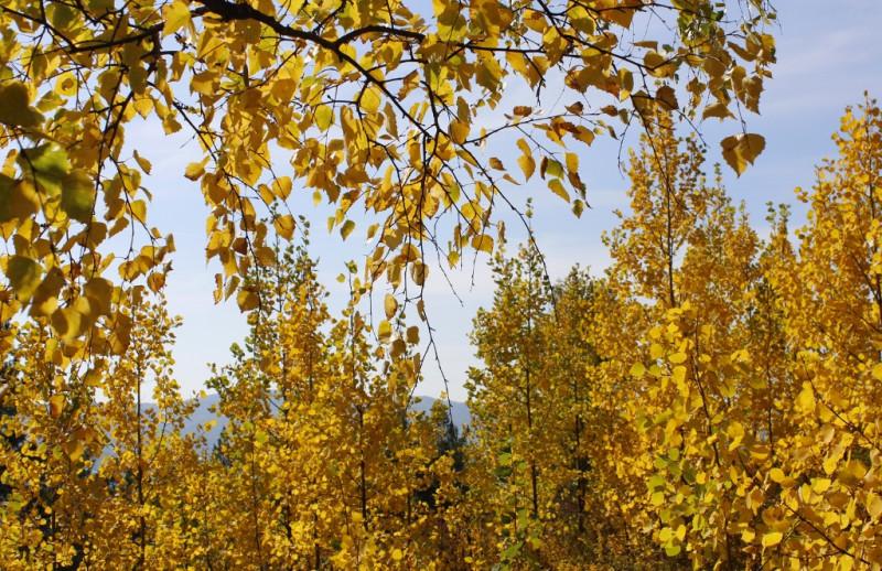 Жёлтый цвет царит в природе...