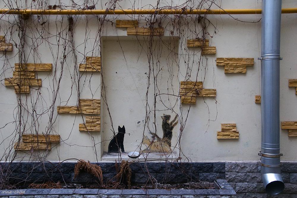 Коты в городе