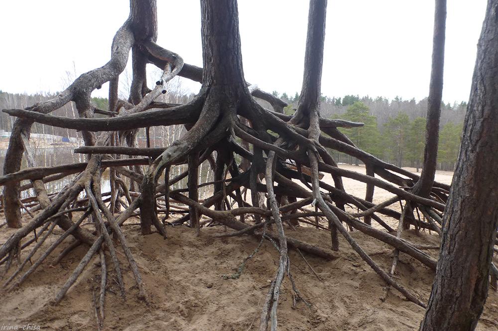 Дюны у Ржавой Канавы