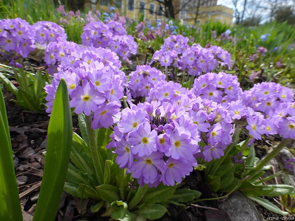 Начало мая в ботаническом саду