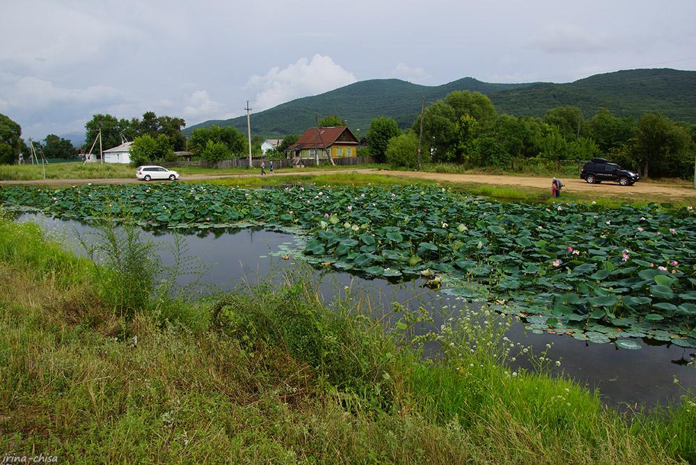 Лотосовый пруд