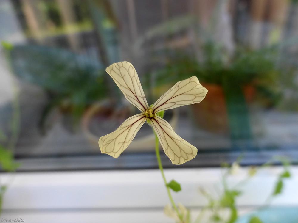 Во саду ли, в огороде - Три возраста девочки, вырезающей лепестки сакуры из рисовой бумаги — ЖЖ