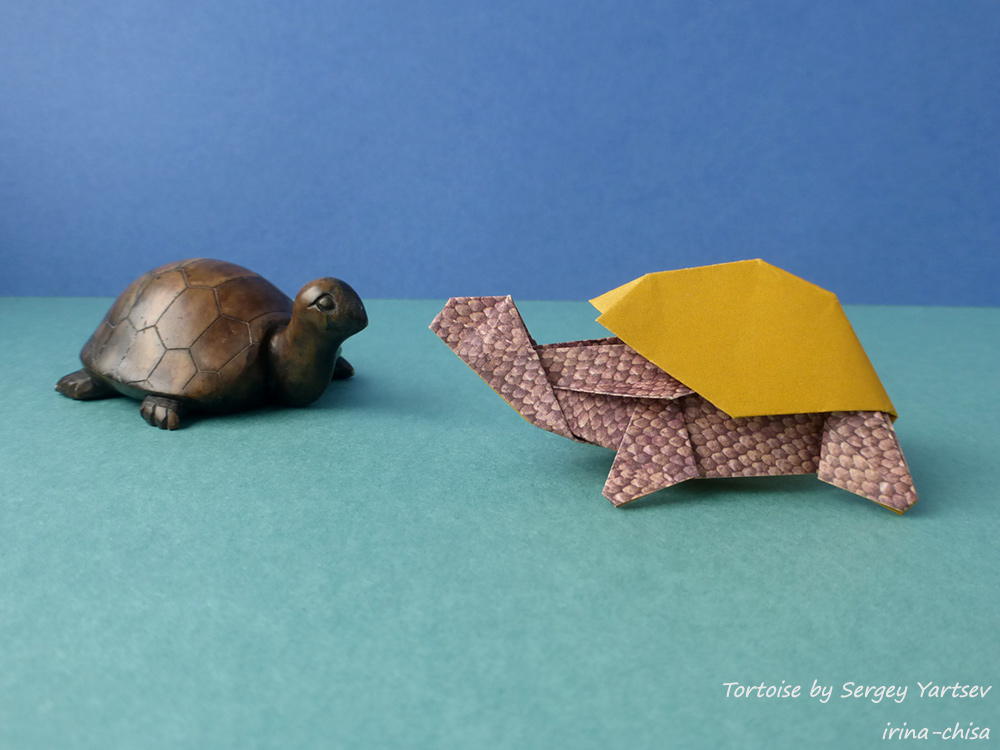 Tortoise by Sergey Yartsev