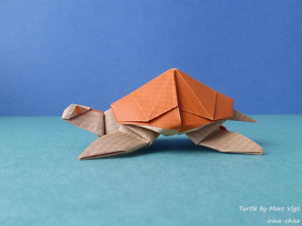 Turtle by Marc Vigo