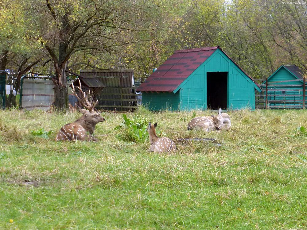 Частный зоопарк (Миракс Парк и Корона)