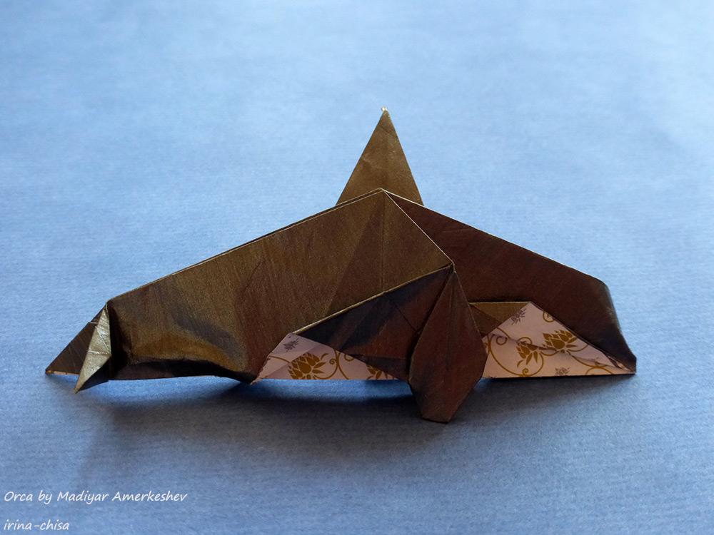 Orca by Madiyar Amerkeshev