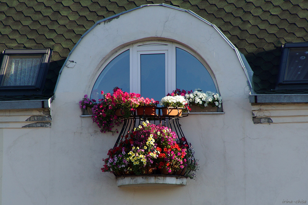 Рязанские окна