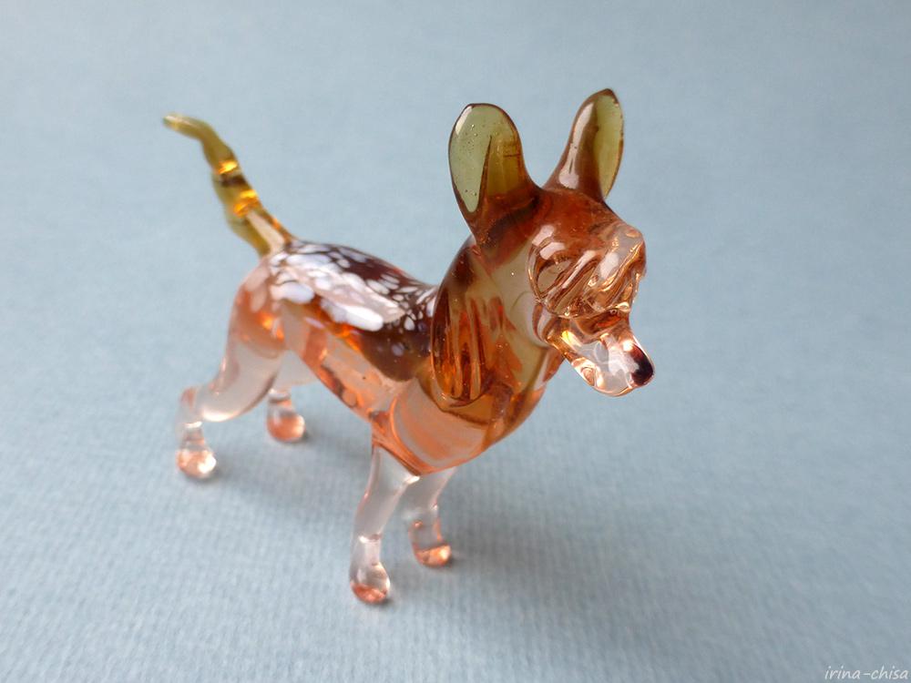 071 Китайская хохлатая собачка 2