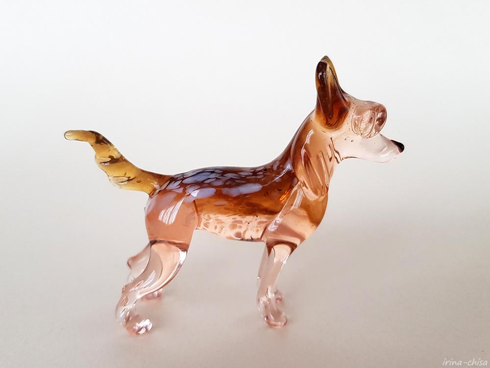 071 Китайская хохлатая собачка 1