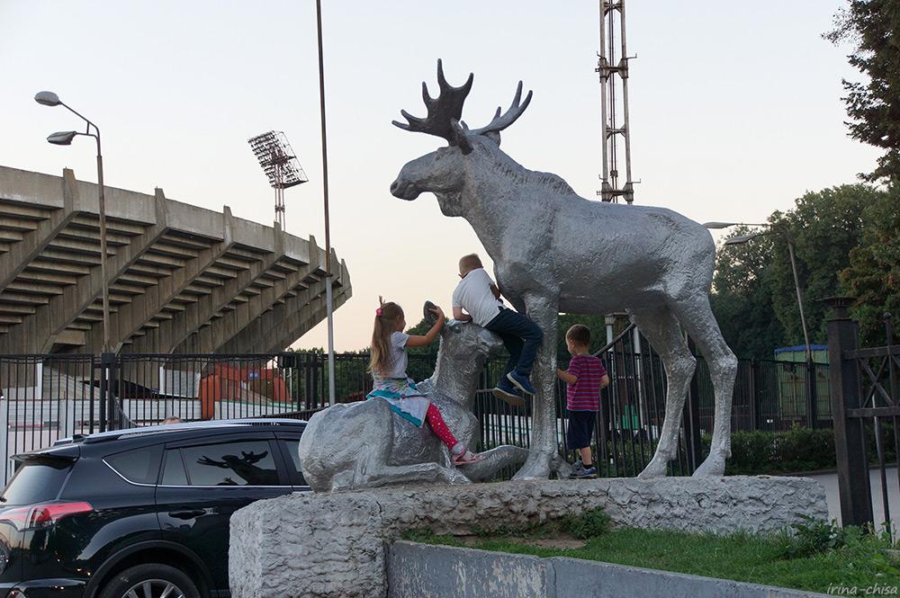 Лось у стадиона