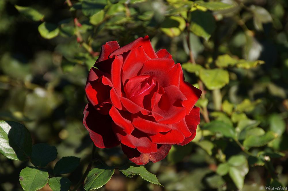 DSC01961 Le Rouge et le Noir