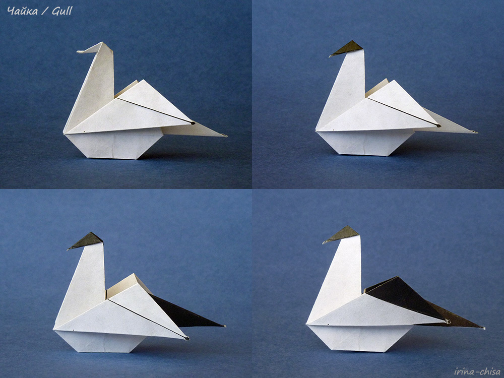 Gull-09