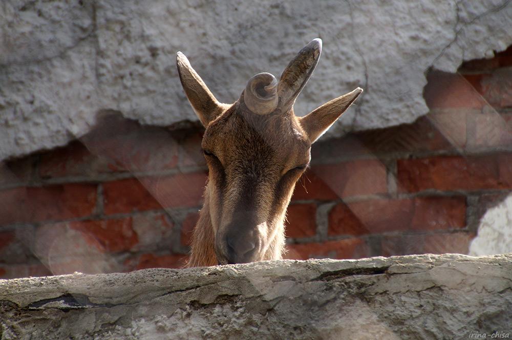 Питерский зоопарк
