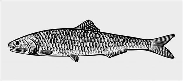 Два простых рецепта из маленькой рыбки