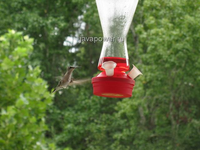 humingbird7