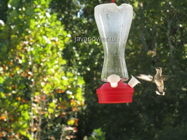 humingbird8