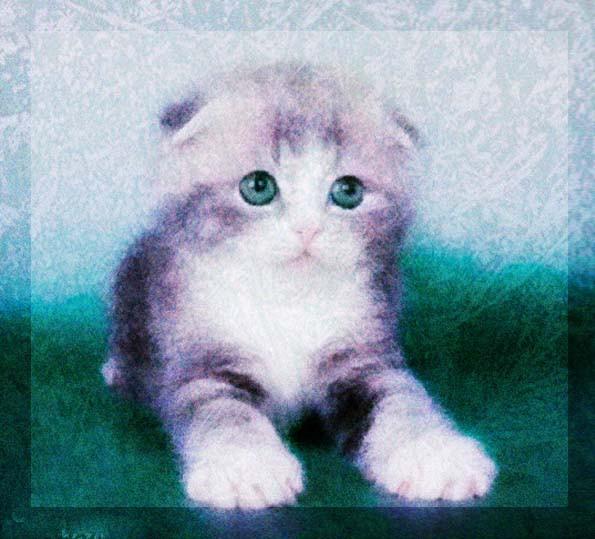 сиреневый котенок