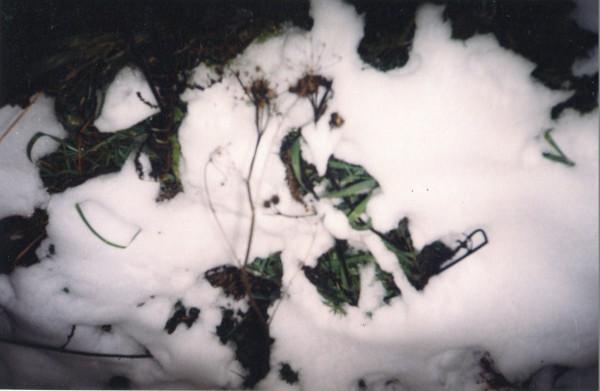 первый снег2