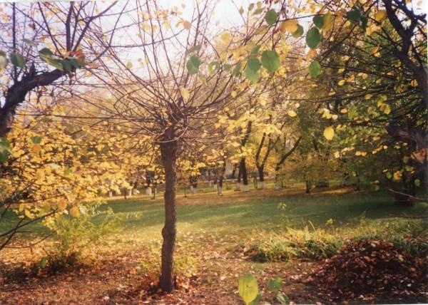 ликующее дерево