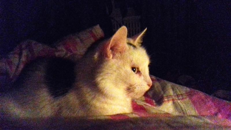 Матильда на одеяле при свечах.