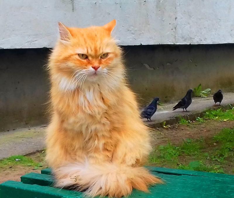 Коты по субботам