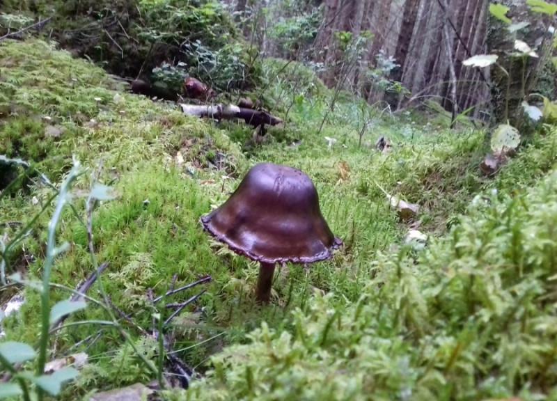 Гриб, это не захиревший в лесу фаллос, это радиоволна!