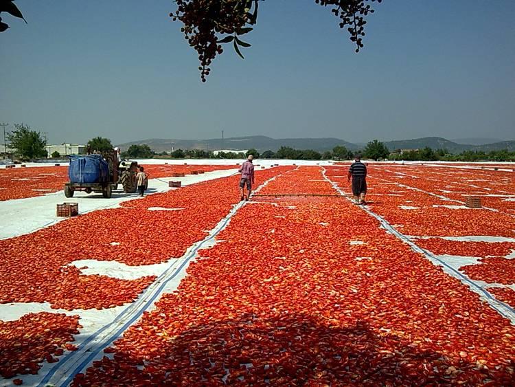 kuru-domates
