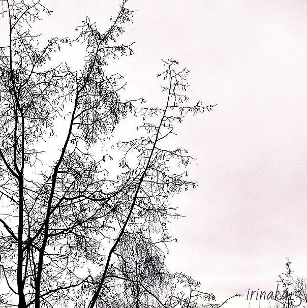 дерево_filtered