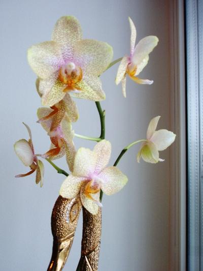 орхидейки (1)