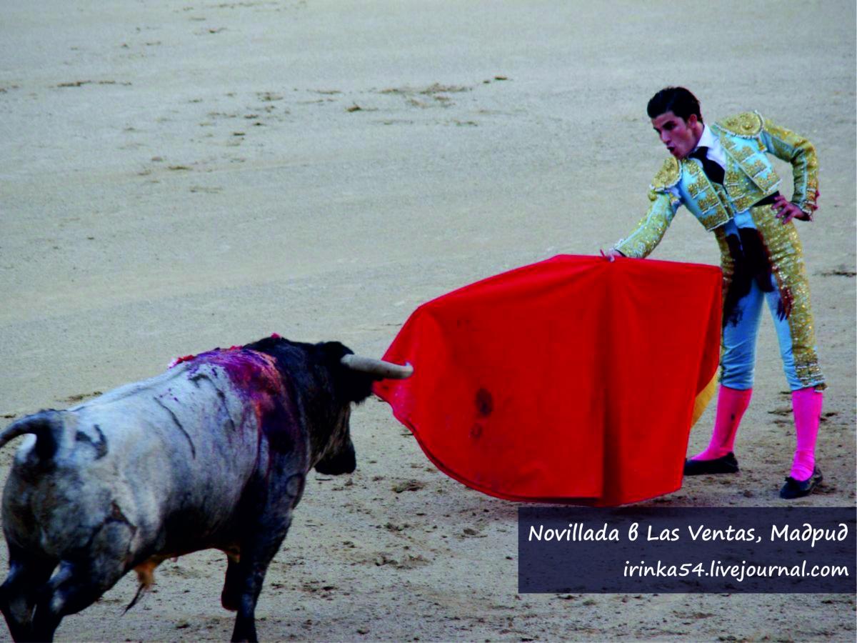 Novillada Las Ventas Madrid
