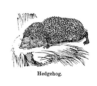 12587487-hedgehog