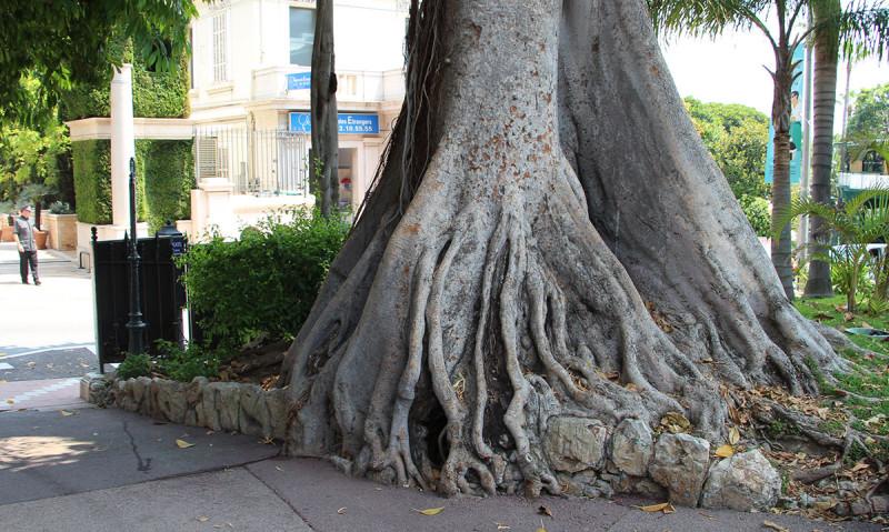 Тесно и трудно здесь даже деревьям