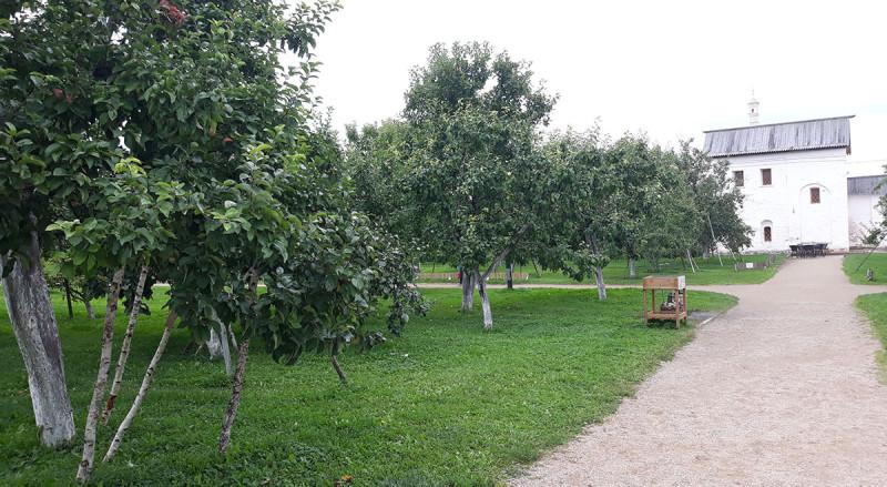 На территории есть сад. Яблоки и груши из сада можно купить. Те, что лежат на траве можно пробовать бесплатно.