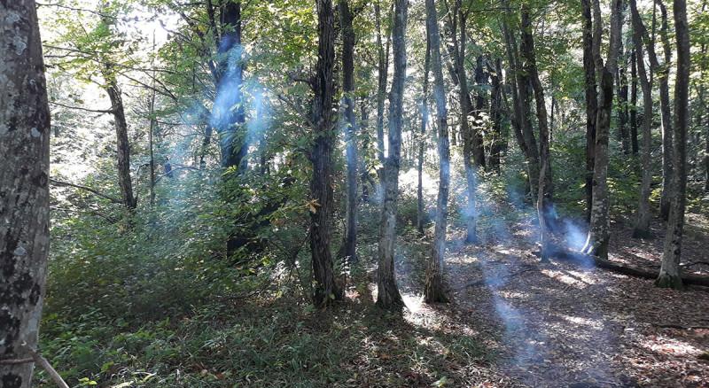 Под конец прогулки был привал, с костром и чаем. И дымом на фоне лучей солнца.