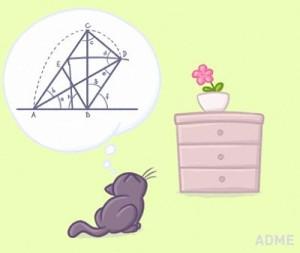whycat.jpg
