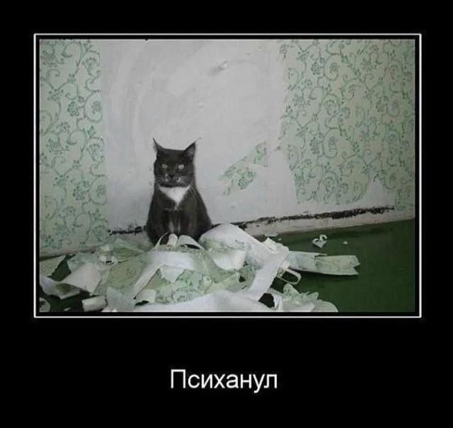 котик-псих