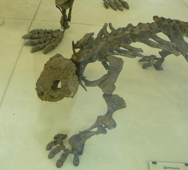 маленький скутозавр