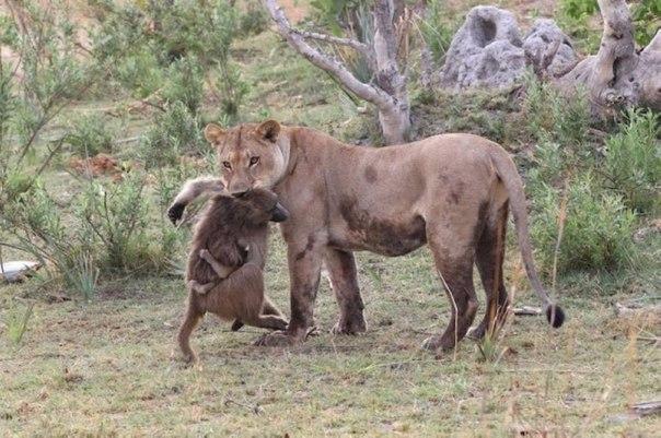 Необычная история о человечности зверей
