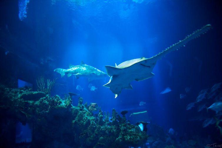 неизвестная рыба-пила6